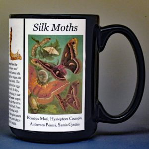 Silk Moths Science & Inventions biographical history mug.